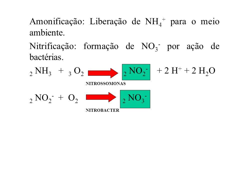 Amonificação: Liberação de NH4+ para o meio ambiente.