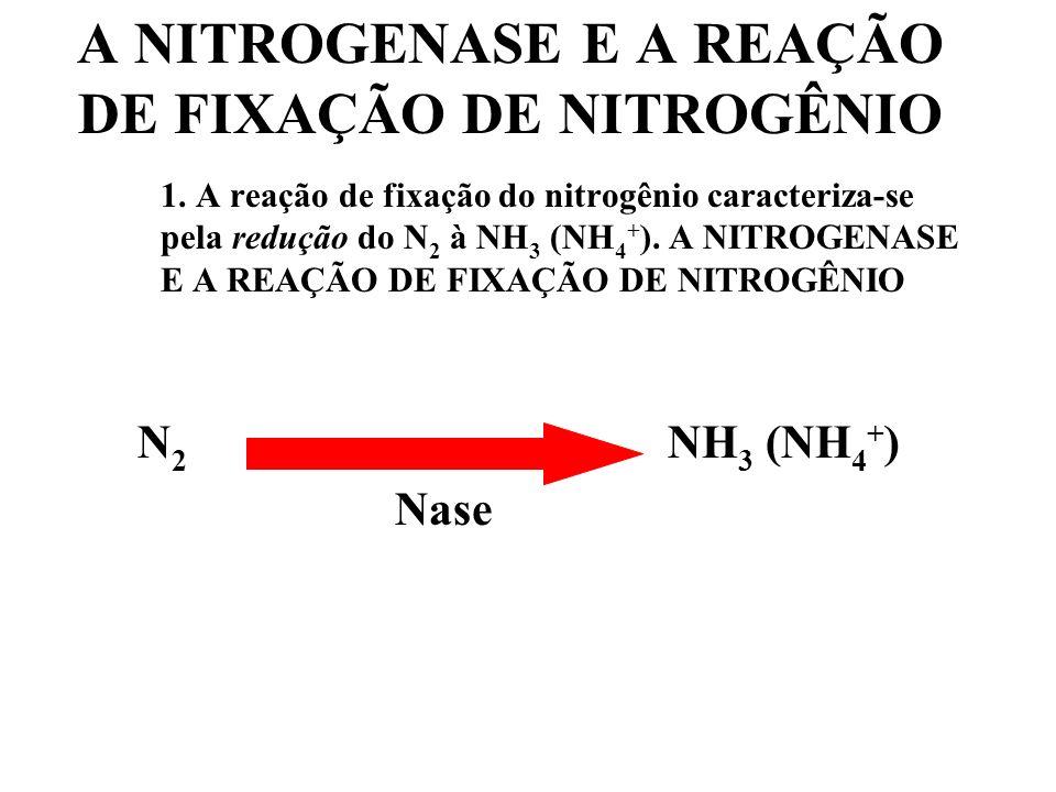 A NITROGENASE E A REAÇÃO DE FIXAÇÃO DE NITROGÊNIO
