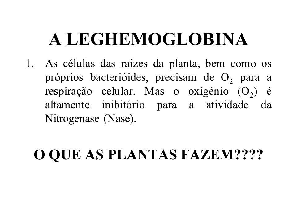 A LEGHEMOGLOBINA O QUE AS PLANTAS FAZEM