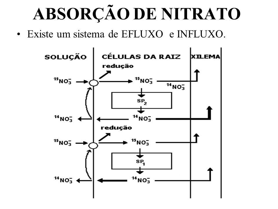 ABSORÇÃO DE NITRATO Existe um sistema de EFLUXO e INFLUXO.