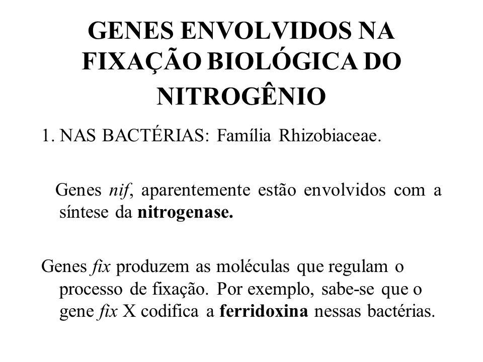 GENES ENVOLVIDOS NA FIXAÇÃO BIOLÓGICA DO NITROGÊNIO