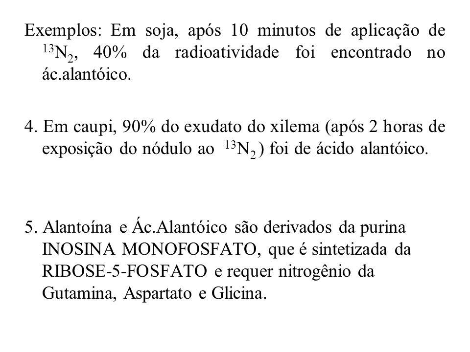 Exemplos: Em soja, após 10 minutos de aplicação de 13N2, 40% da radioatividade foi encontrado no ác.alantóico.