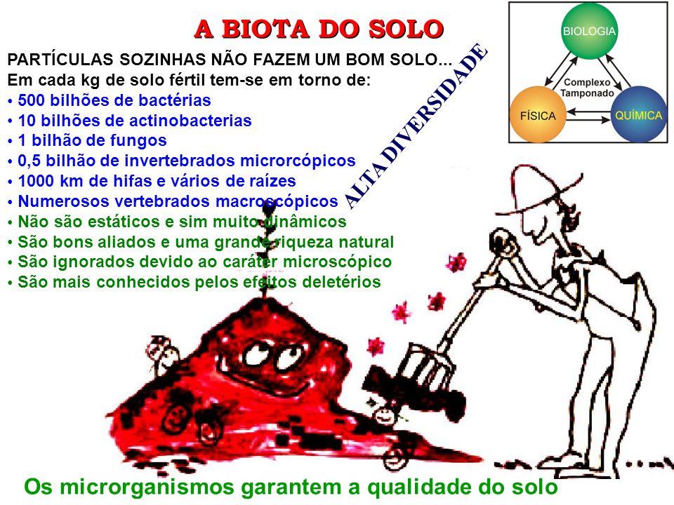 A BIOTA DO SOLO Os microrganismos garantem a qualidade do solo