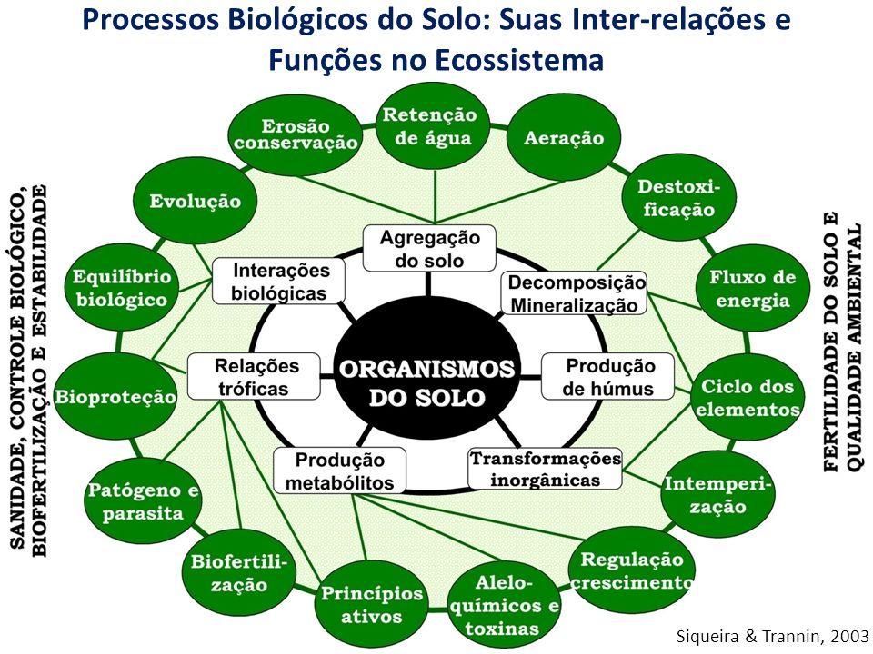 Processos Biológicos do Solo: Suas Inter-relações e Funções no Ecossistema