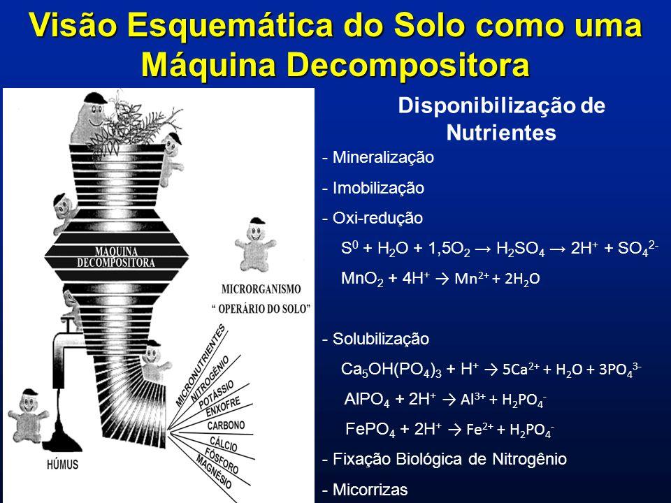 Visão Esquemática do Solo como uma Máquina Decompositora