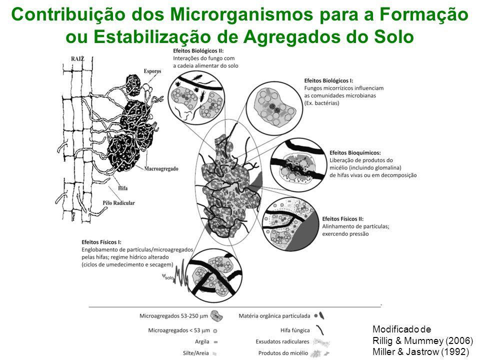 Contribuição dos Microrganismos para a Formação ou Estabilização de Agregados do Solo