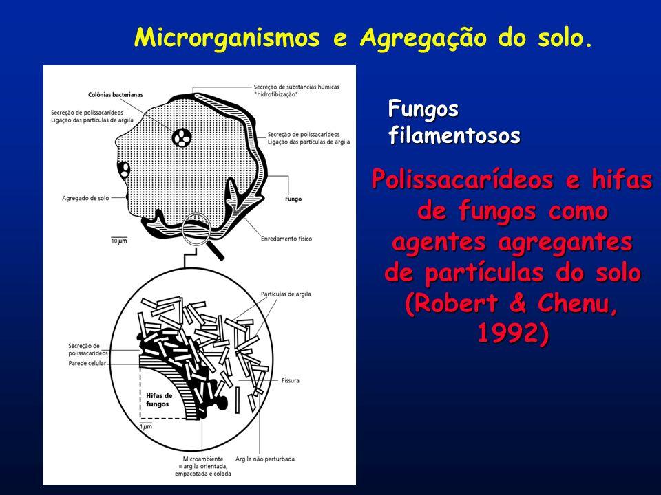 Microrganismos e Agregação do solo. Polissacarídeos e hifas