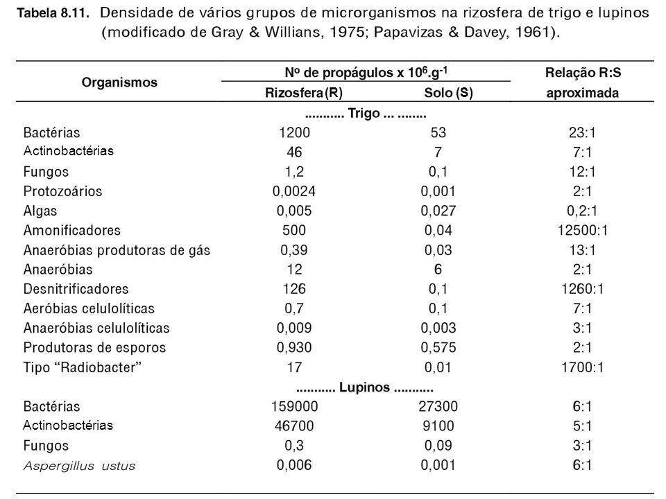 (R) (S) Actinobactérias Actinobactérias