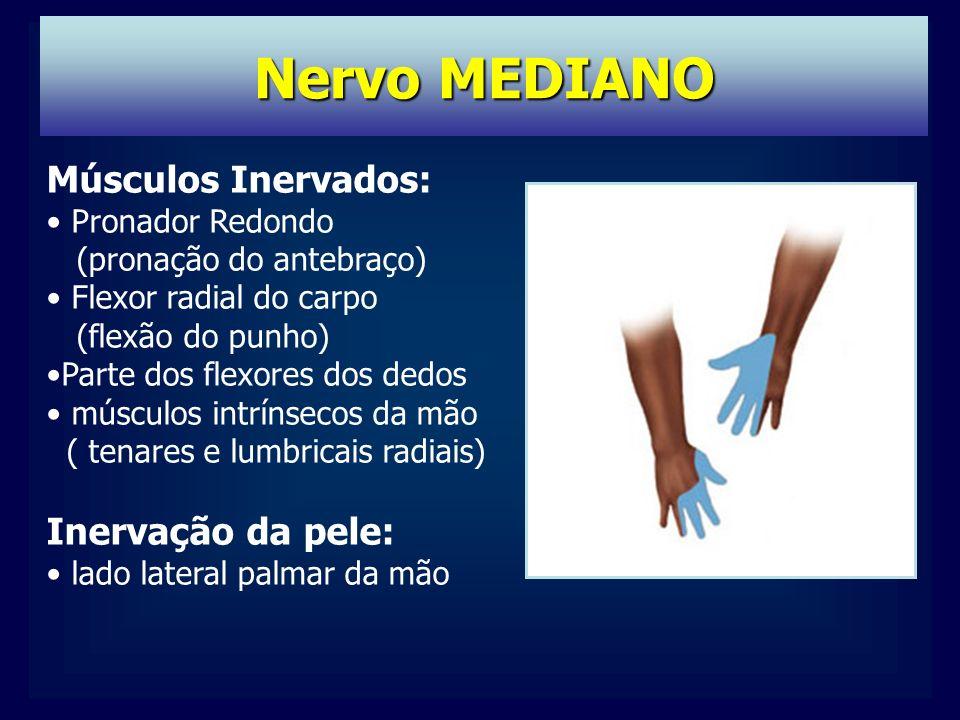 Nervo MEDIANO Músculos Inervados: Inervação da pele: Pronador Redondo