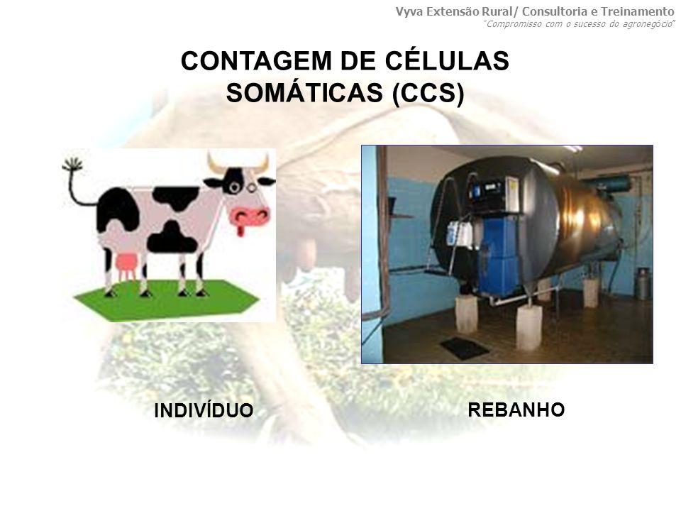 CONTAGEM DE CÉLULAS SOMÁTICAS (CCS)