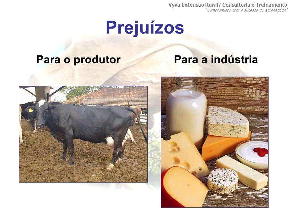 Prejuízos Para o produtor Para a indústria