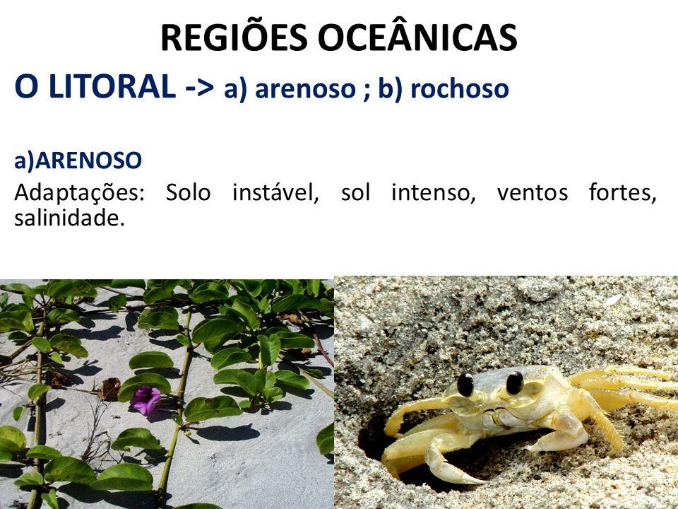 REGIÕES OCEÂNICAS O LITORAL -> a) arenoso ; b) rochoso ARENOSO