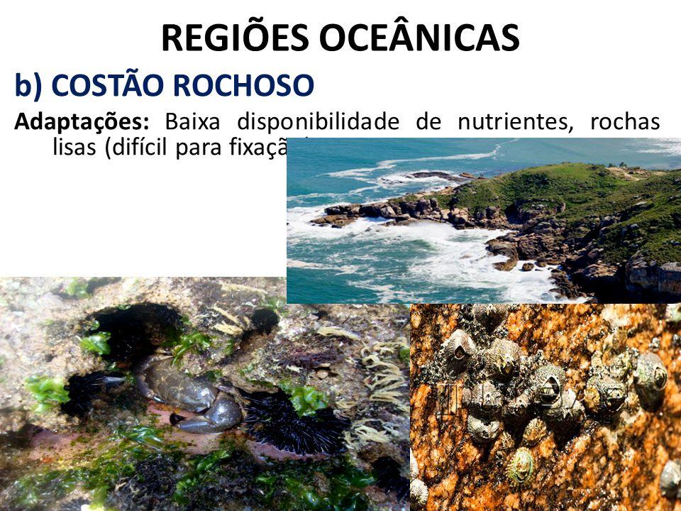 REGIÕES OCEÂNICAS b) COSTÃO ROCHOSO