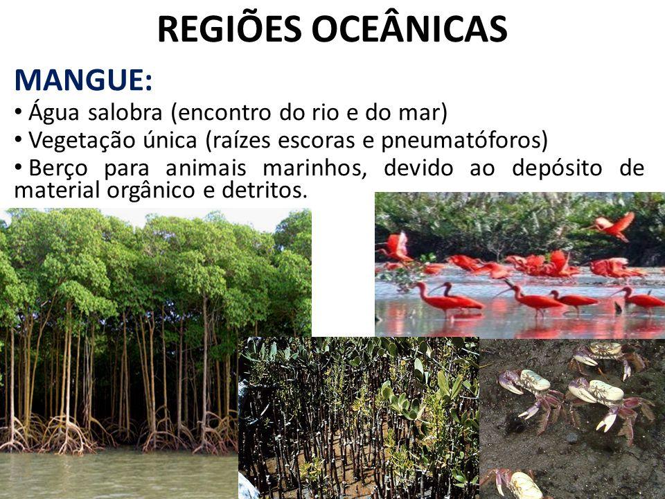 REGIÕES OCEÂNICAS MANGUE: Água salobra (encontro do rio e do mar)