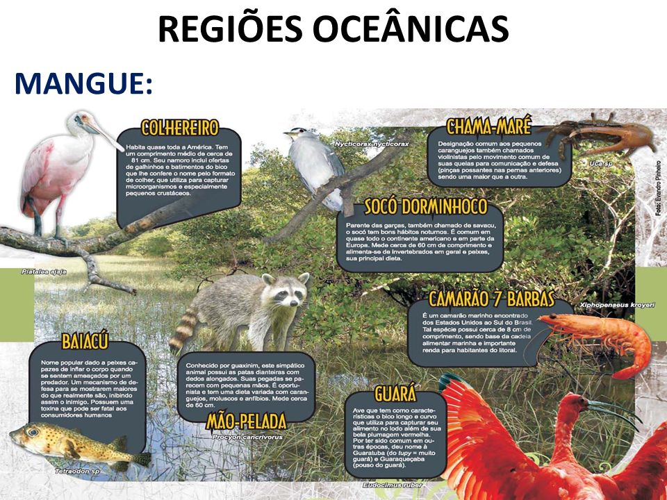 REGIÕES OCEÂNICAS MANGUE: