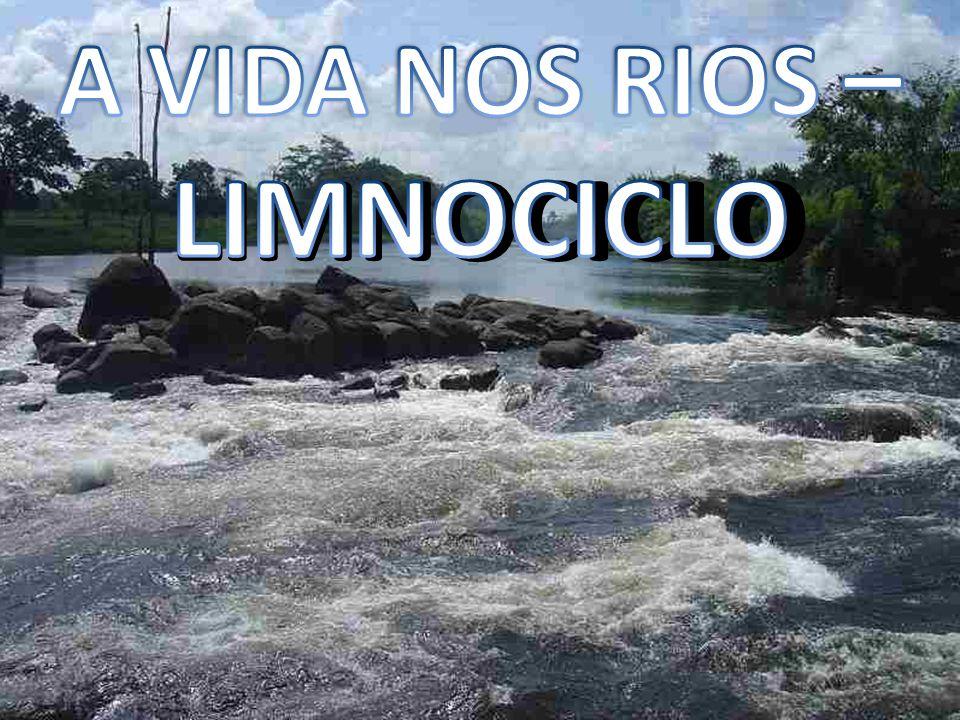 A VIDA NOS RIOS – LIMNOCICLO