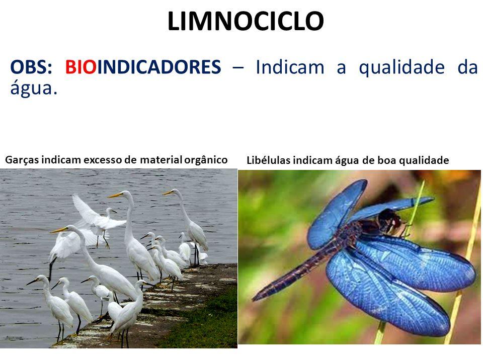 LIMNOCICLO OBS: BIOINDICADORES – Indicam a qualidade da água.