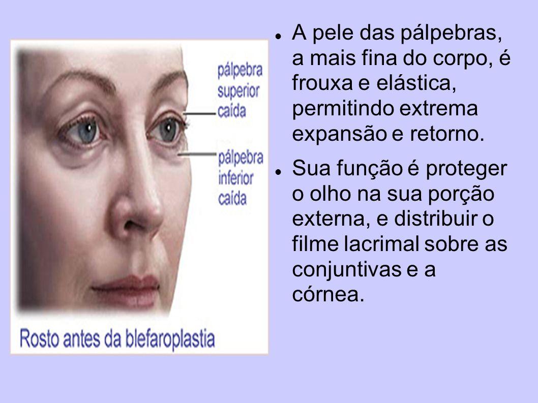 A pele das pálpebras, a mais fina do corpo, é frouxa e elástica, permitindo extrema expansão e retorno.