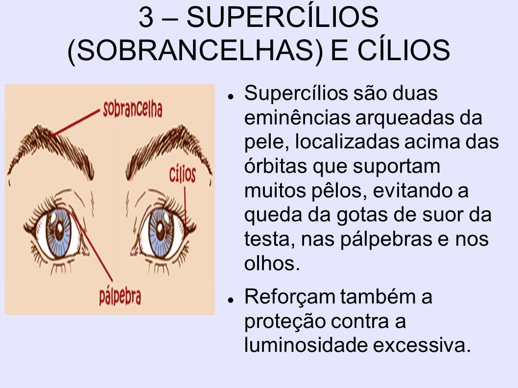 3 – SUPERCÍLIOS (SOBRANCELHAS) E CÍLIOS