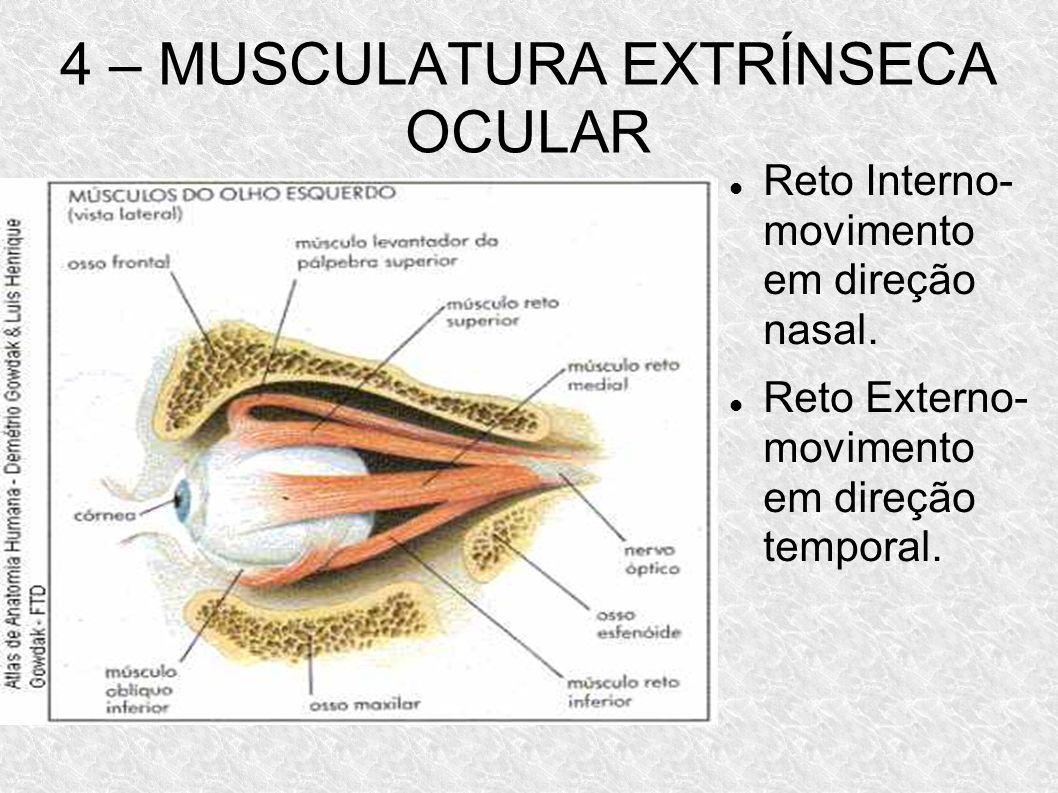 4 – MUSCULATURA EXTRÍNSECA OCULAR