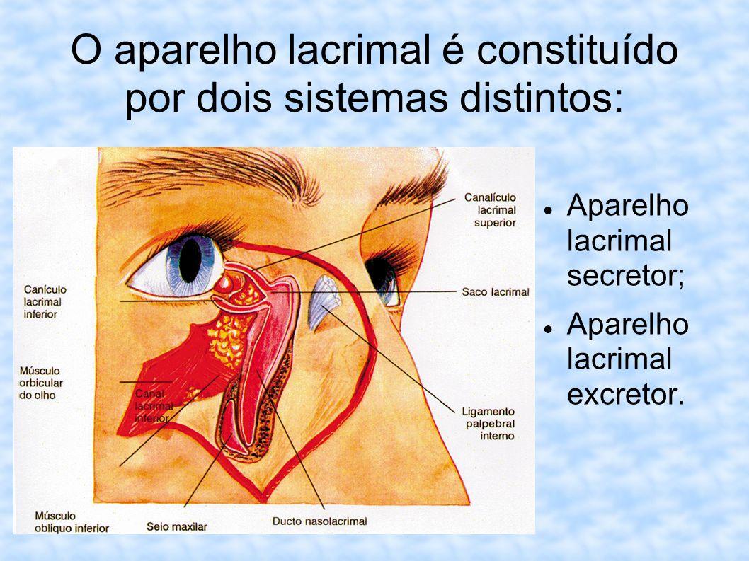 O aparelho lacrimal é constituído por dois sistemas distintos: