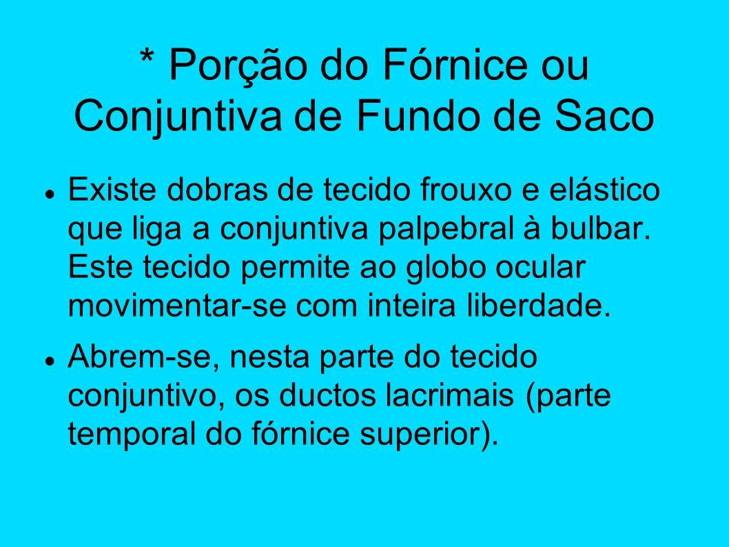 * Porção do Fórnice ou Conjuntiva de Fundo de Saco