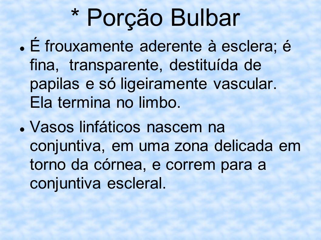 * Porção Bulbar É frouxamente aderente à esclera; é fina, transparente, destituída de papilas e só ligeiramente vascular. Ela termina no limbo.