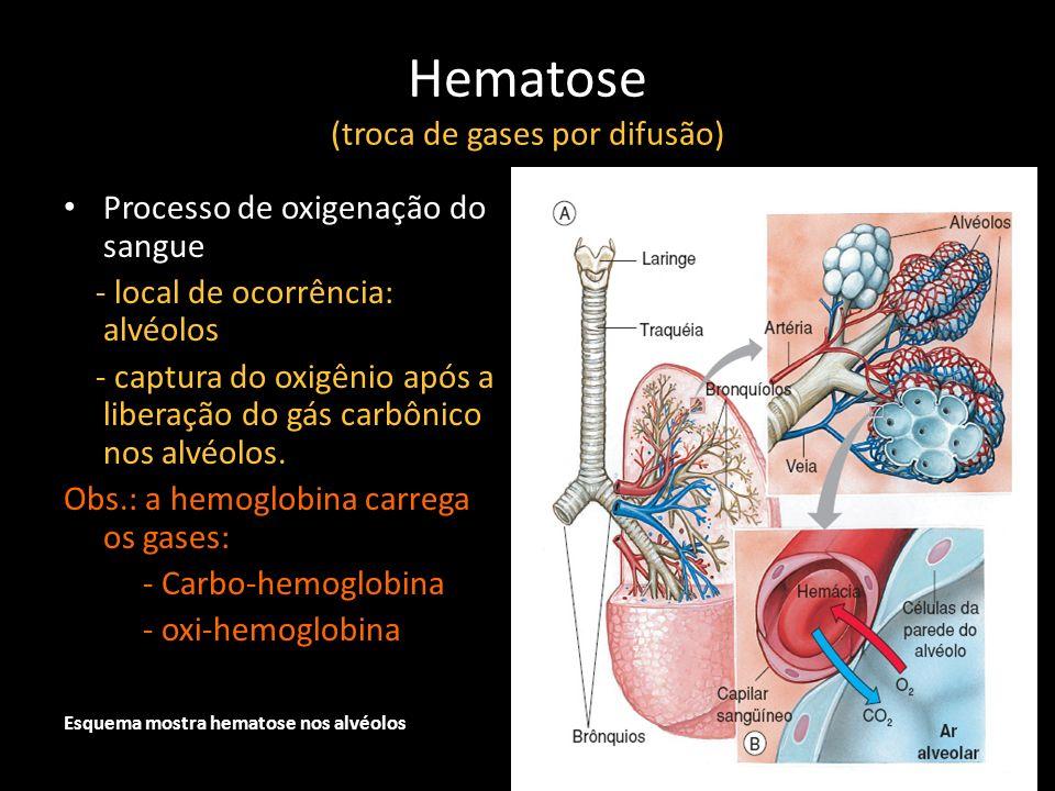 Hematose (troca de gases por difusão)