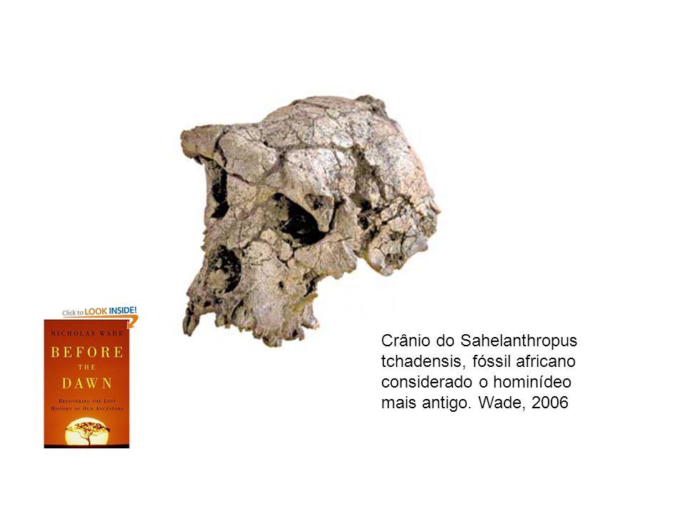 Crânio do Sahelanthropus tchadensis, fóssil africano considerado o hominídeo mais antigo. Wade, 2006