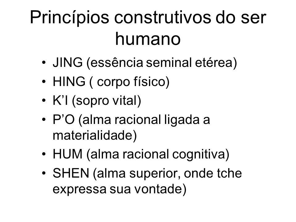 Princípios construtivos do ser humano