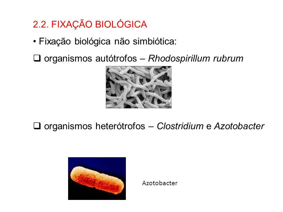 Fixação biológica não simbiótica: