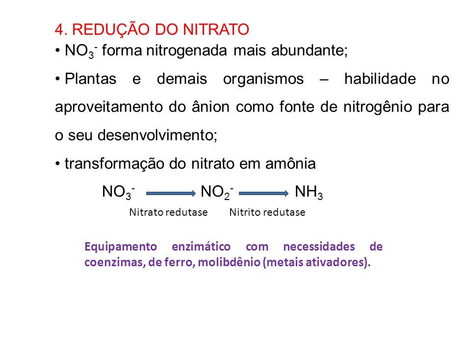 NO3- forma nitrogenada mais abundante;