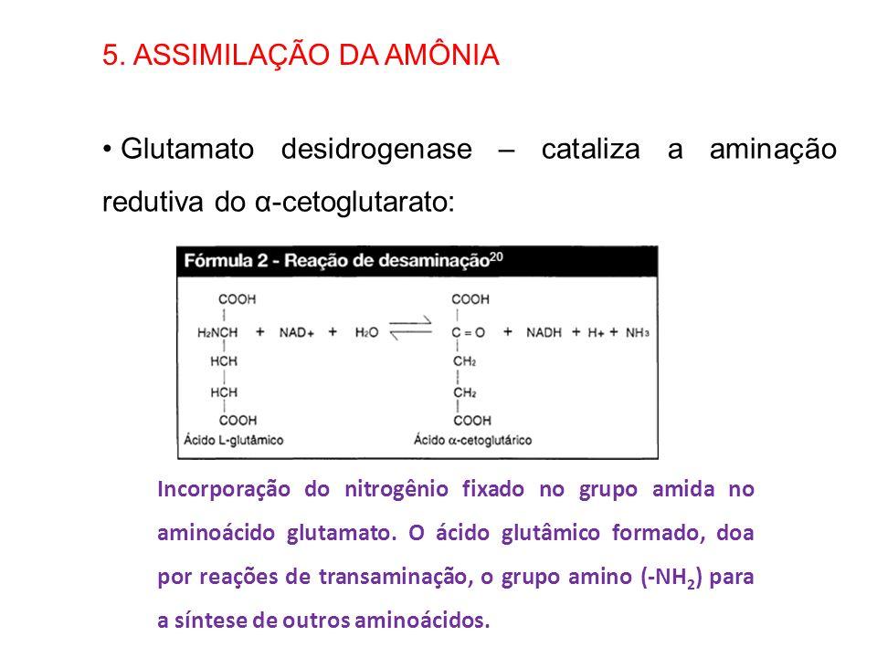 5. ASSIMILAÇÃO DA AMÔNIA Glutamato desidrogenase – cataliza a aminação redutiva do α-cetoglutarato: