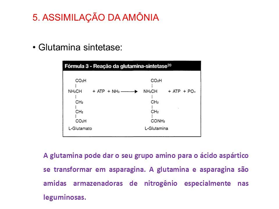 5. ASSIMILAÇÃO DA AMÔNIA Glutamina sintetase: