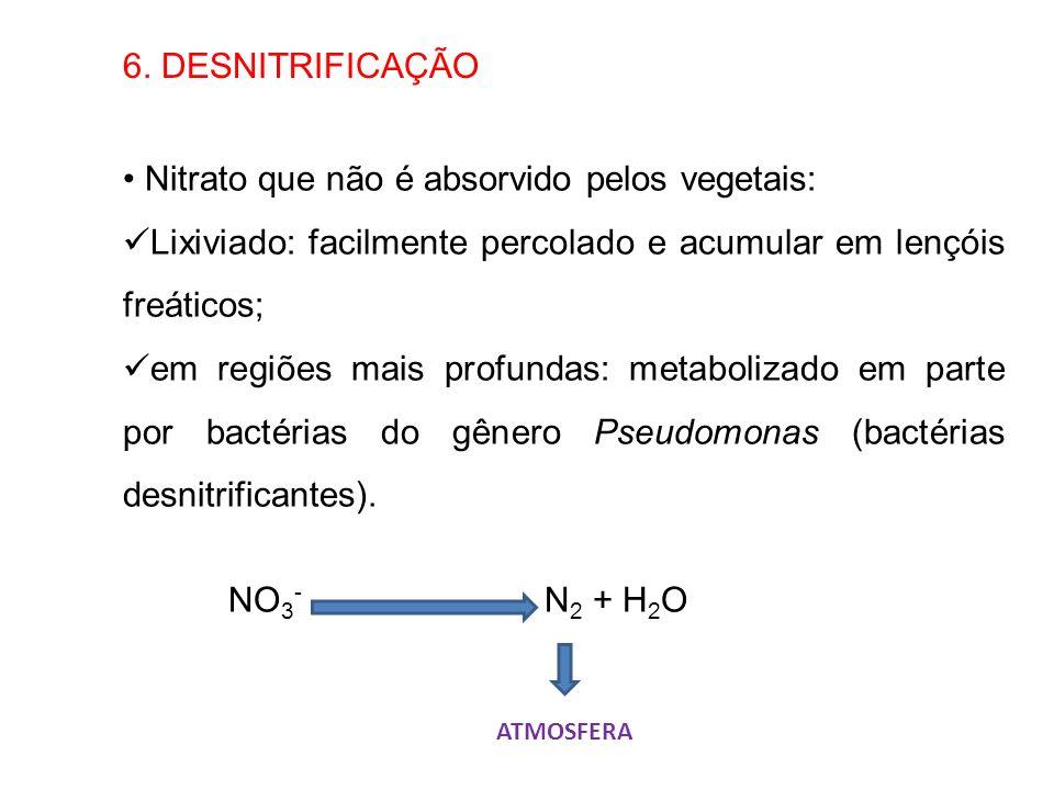 Nitrato que não é absorvido pelos vegetais: