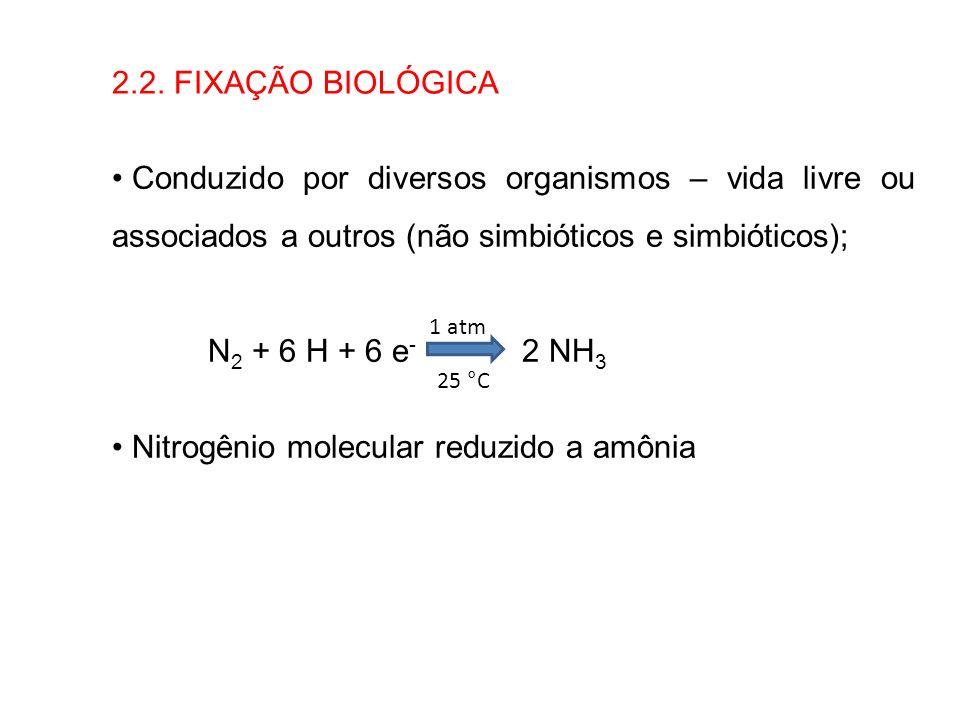 Nitrogênio molecular reduzido a amônia