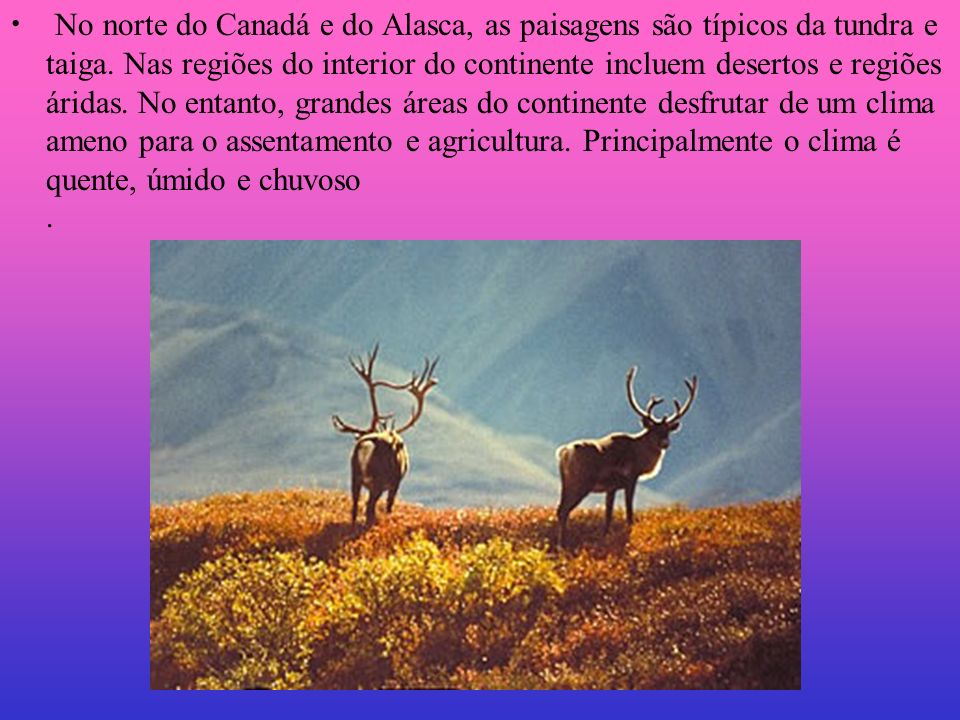 No norte do Canadá e do Alasca, as paisagens são típicos da tundra e taiga.