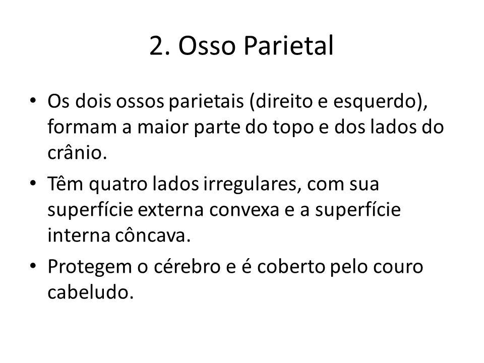 2. Osso ParietalOs dois ossos parietais (direito e esquerdo), formam a maior parte do topo e dos lados do crânio.