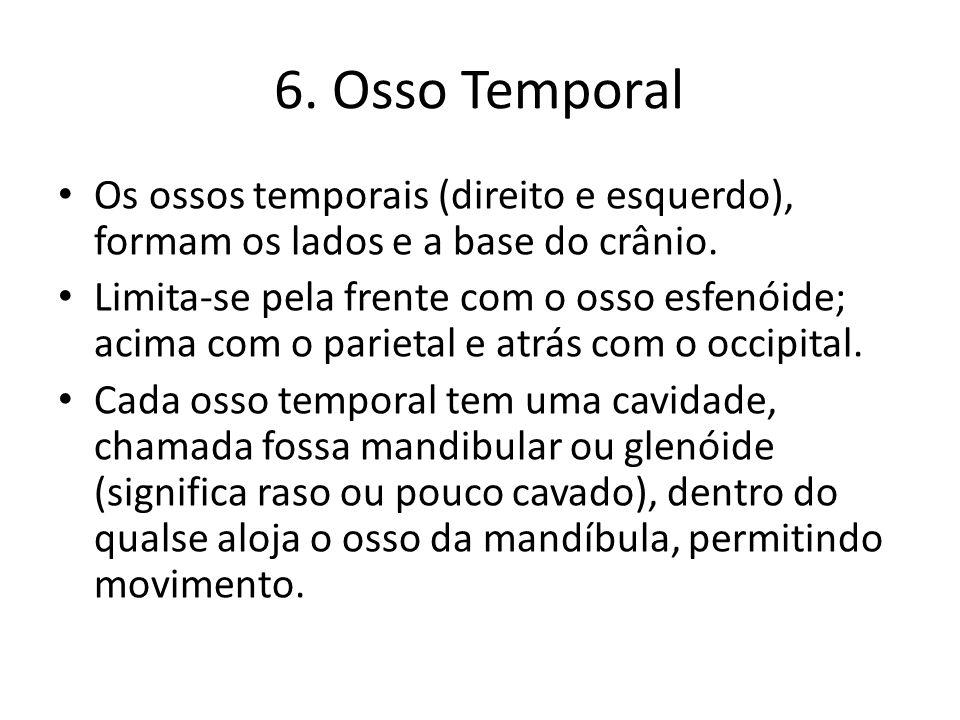 6. Osso TemporalOs ossos temporais (direito e esquerdo), formam os lados e a base do crânio.