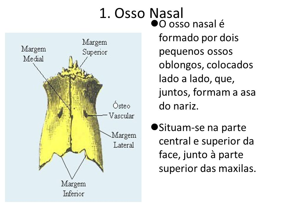 1. Osso NasalO osso nasal é formado por dois pequenos ossos oblongos, colocados lado a lado, que, juntos, formam a asa do nariz.