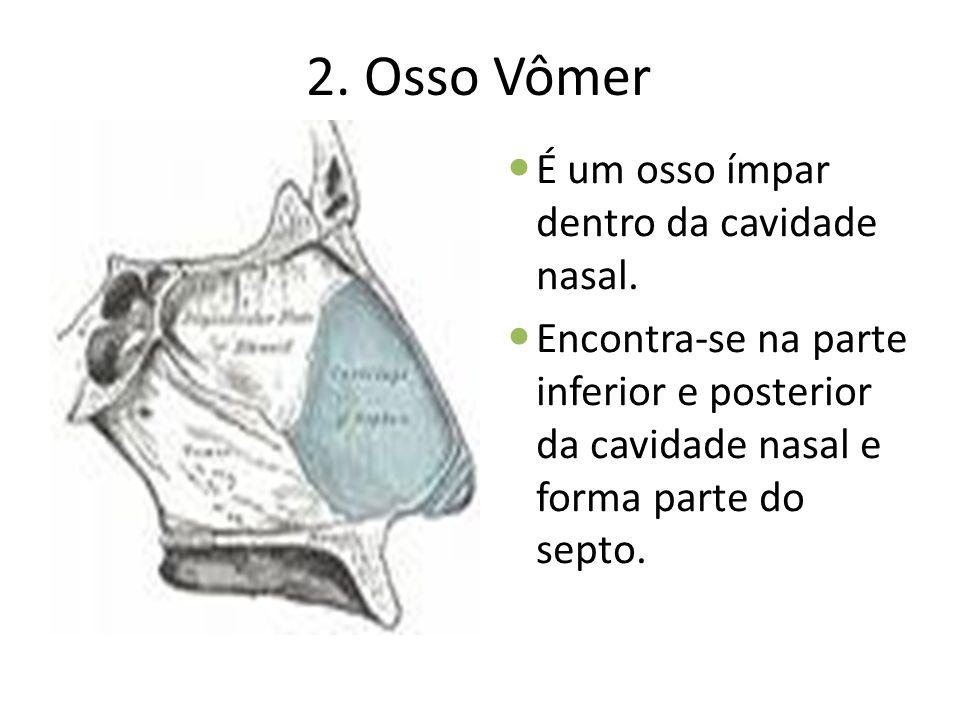 2. Osso Vômer É um osso ímpar dentro da cavidade nasal.