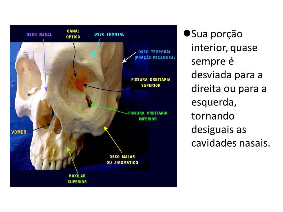 Sua porção interior, quase sempre é desviada para a direita ou para a esquerda, tornando desiguais as cavidades nasais.