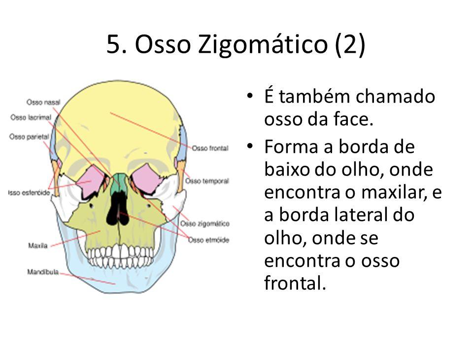 5. Osso Zigomático (2) É também chamado osso da face.