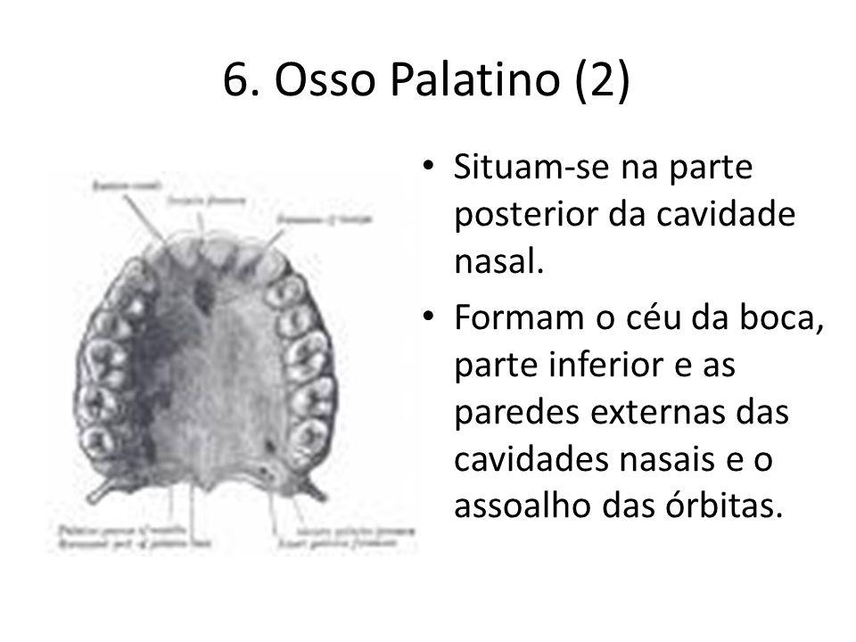 6. Osso Palatino (2) Situam-se na parte posterior da cavidade nasal.