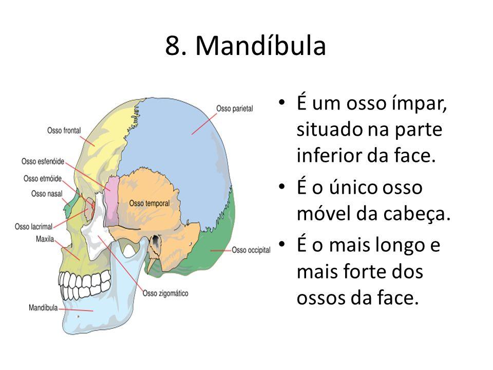 8. Mandíbula É um osso ímpar, situado na parte inferior da face.