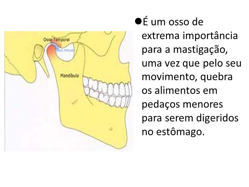 É um osso de extrema importância para a mastigação, uma vez que pelo seu movimento, quebra os alimentos em pedaços menores para serem digeridos no estômago.