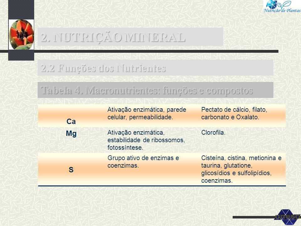 2. NUTRIÇÃO MINERAL 2.2 Funções dos Nutrientes