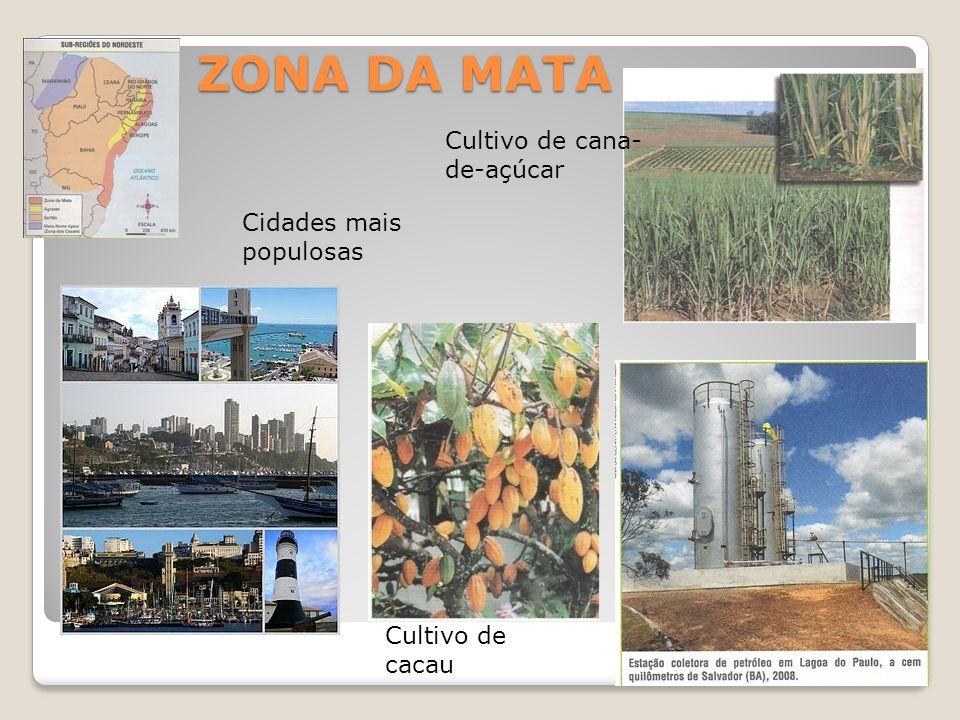 ZONA DA MATA Cultivo de cana-de-açúcar Cidades mais populosas