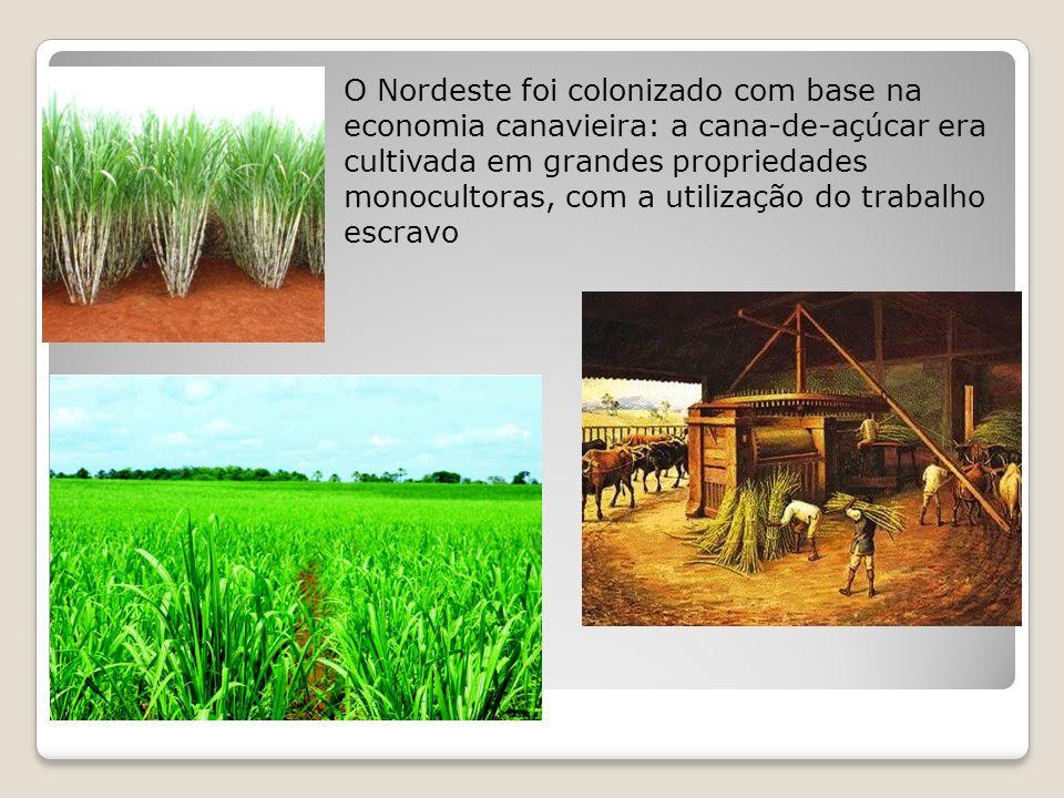O Nordeste foi colonizado com base na economia canavieira: a cana-de-açúcar era cultivada em grandes propriedades monocultoras, com a utilização do trabalho escravo