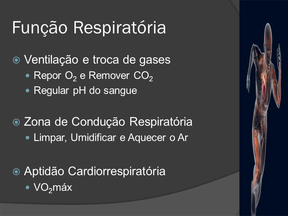 Função Respiratória Ventilação e troca de gases